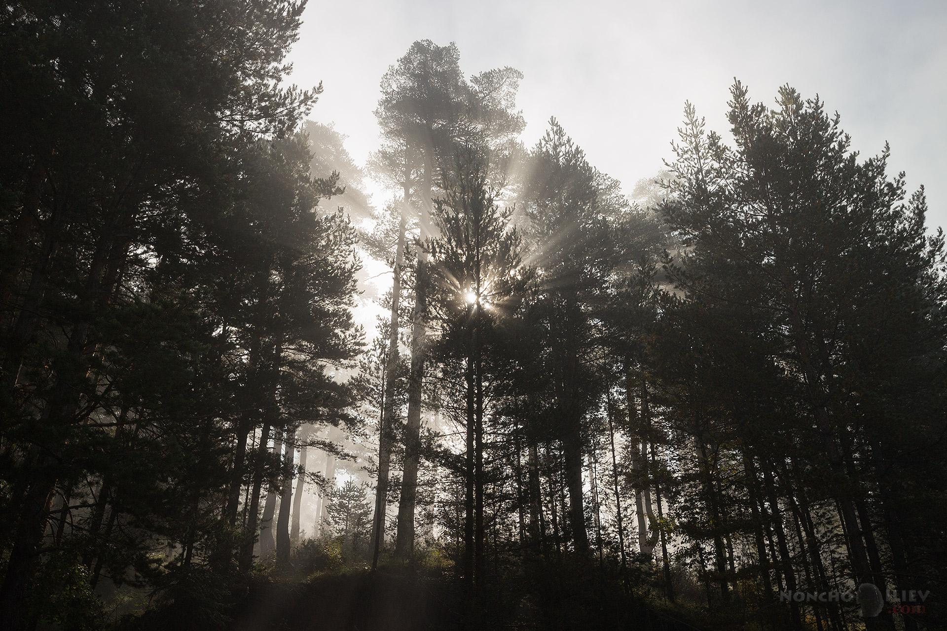Мъглива сутрин Родопи
