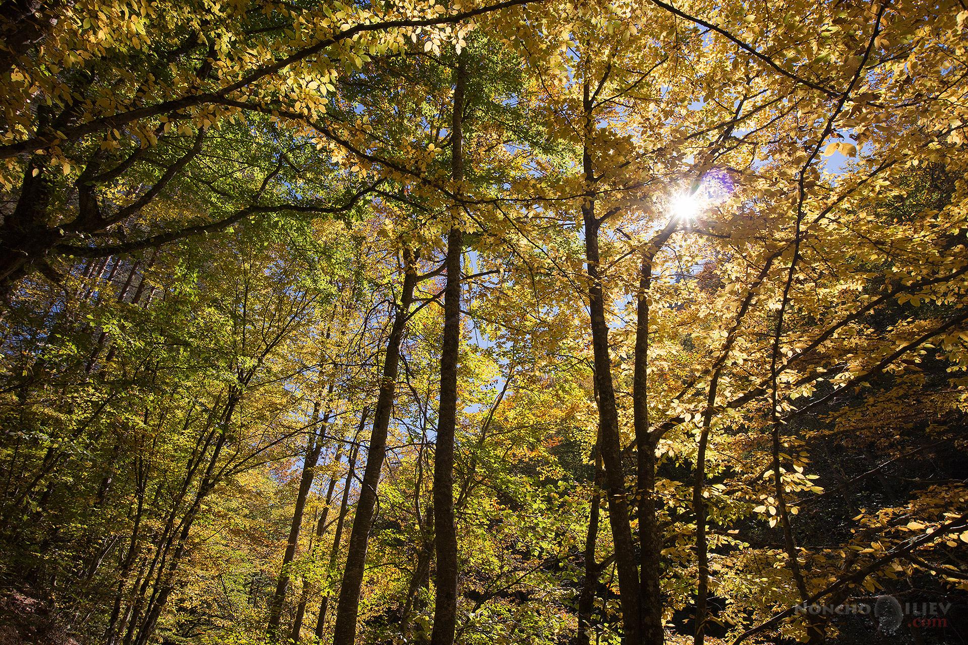 Златна гора Родопи