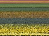 Цветни поля, Койкенхоф
