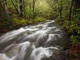 Стара река напролет