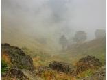 Рай в мъгла