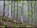 Гора в мъгла