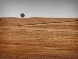 Жътвено поле