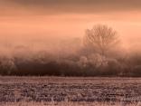 Тихи зимни утрини