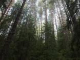 Стара родопска гора