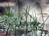 Заскрежена трева