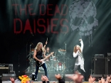 SAM_3363_TheDeadDaisies