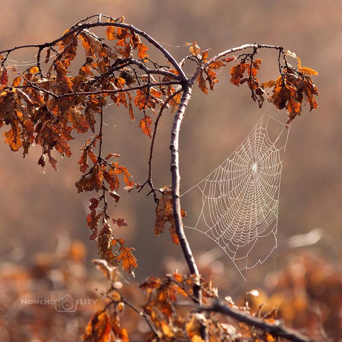 Паяжина за събиране на есенни лъчи