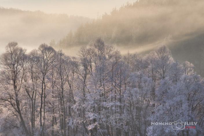 Зима, скреж