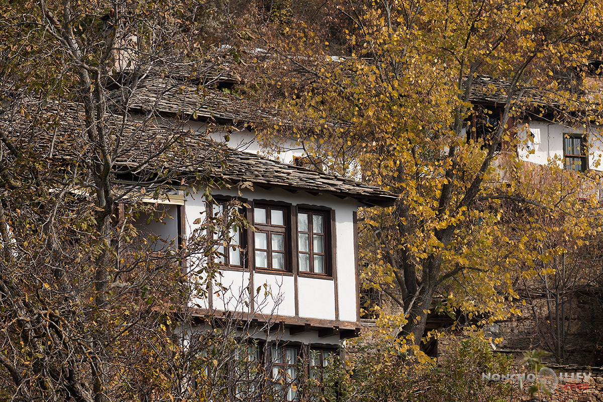 Фото Форум Фест 2014 есен в Лещен