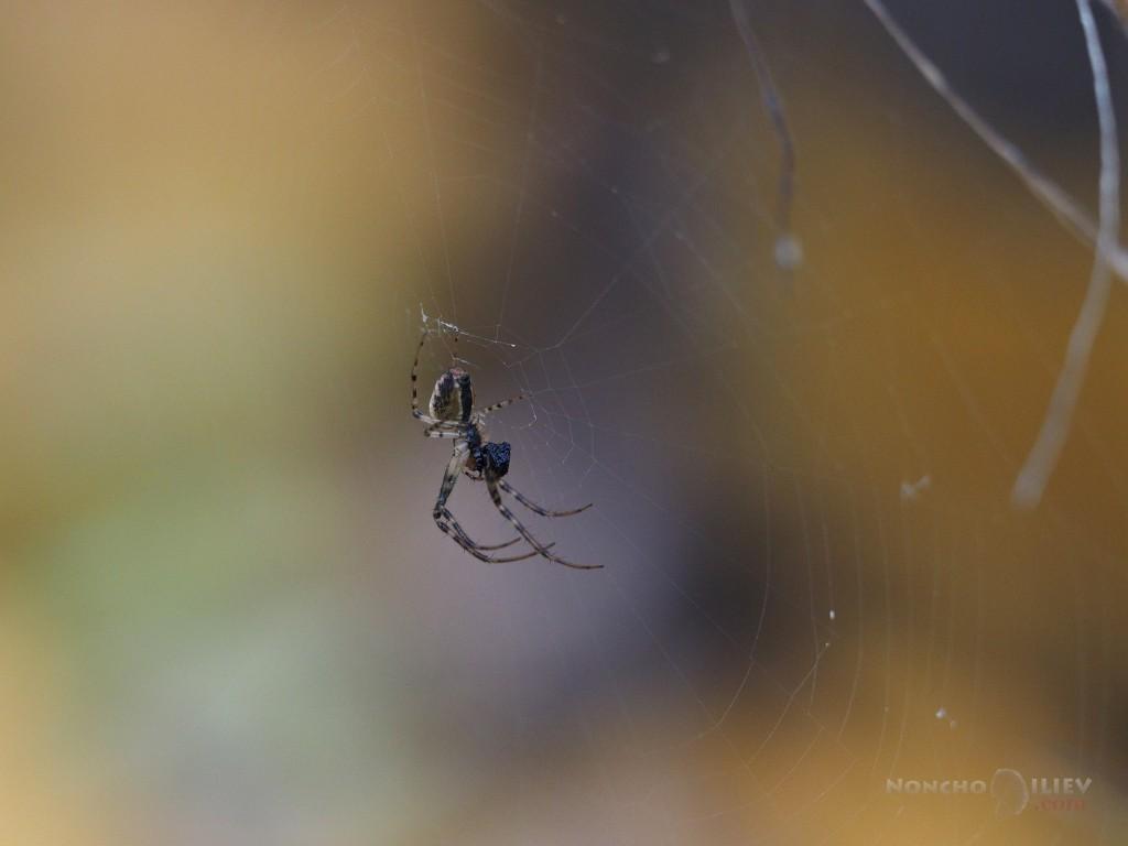 Olympus 40-150 2.8 spider macro