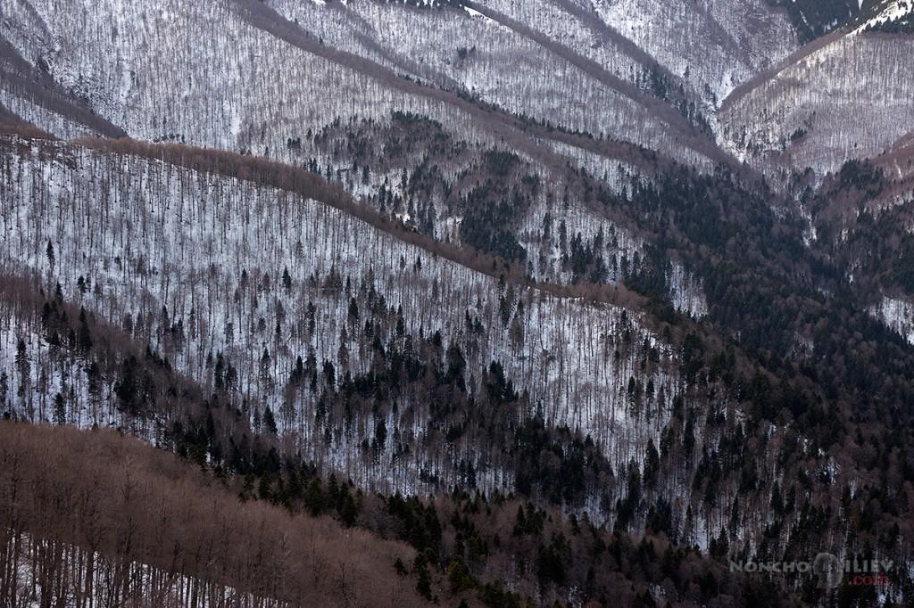 Гори и долини, Царичина