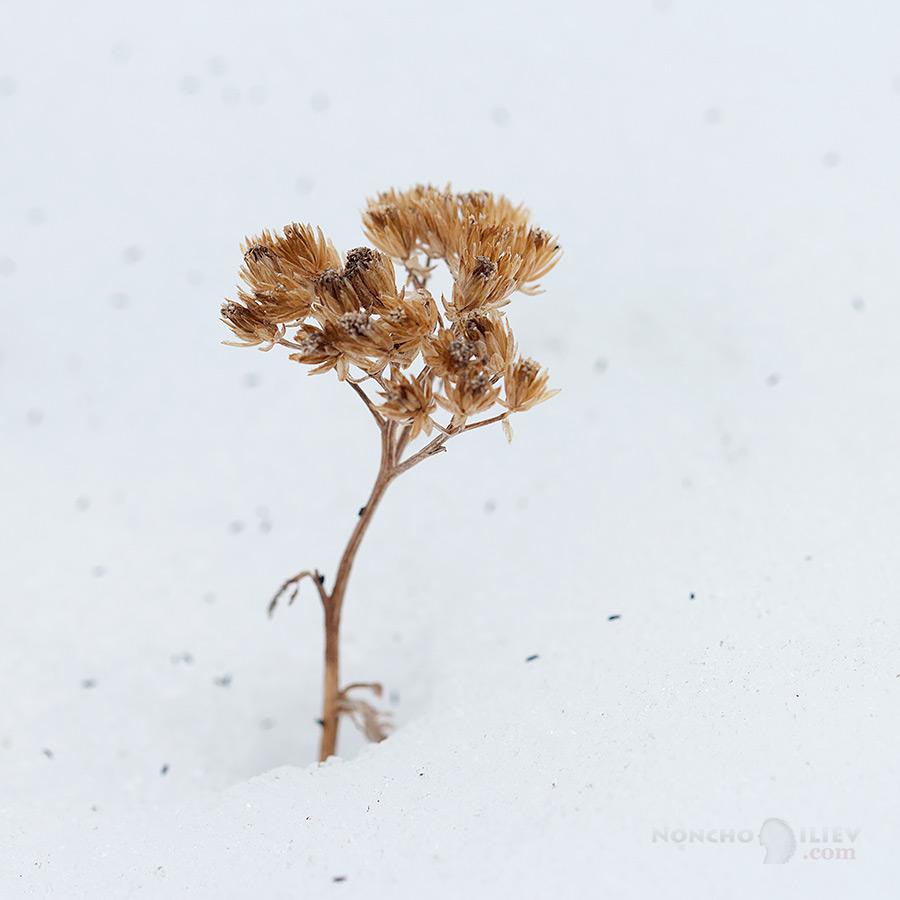 В плен на сняг