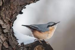 птици, зима, парк