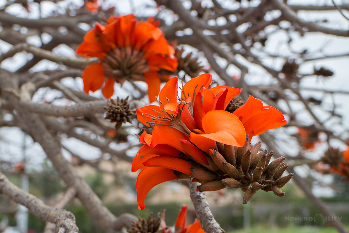 оранжев цвят