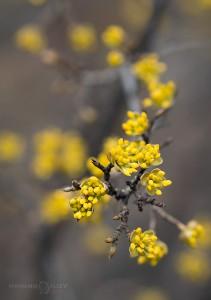 дрян пролет