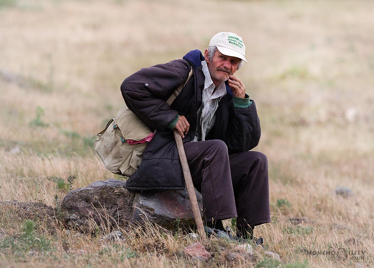 източни родопи овчар портрет