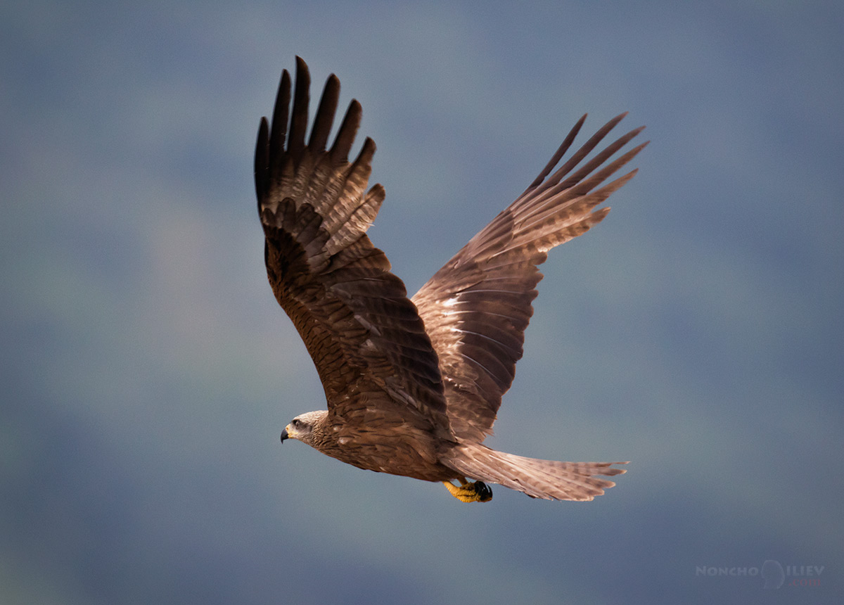 родопи каня полет