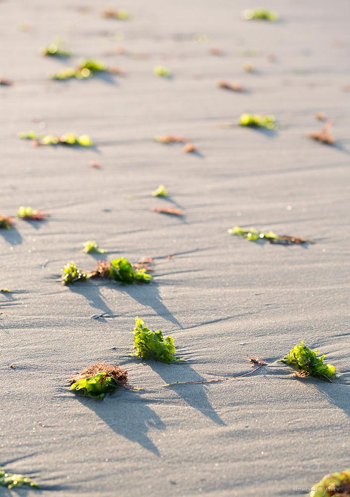 изгрев плаж водорасли