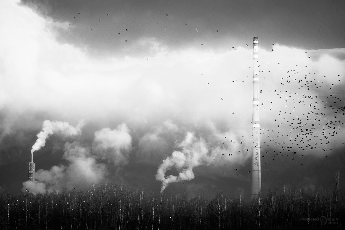 комини пушек птици пейзаж