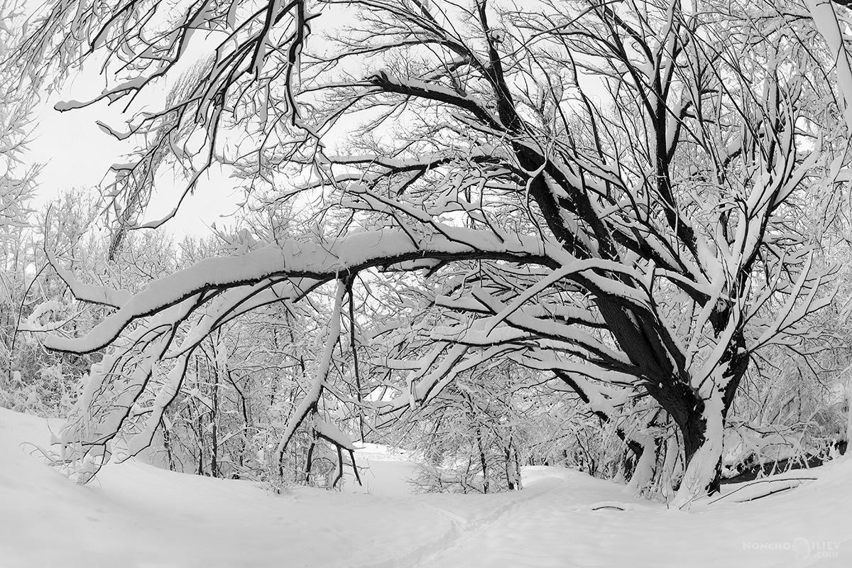зима 2016 сняг южен парк софия