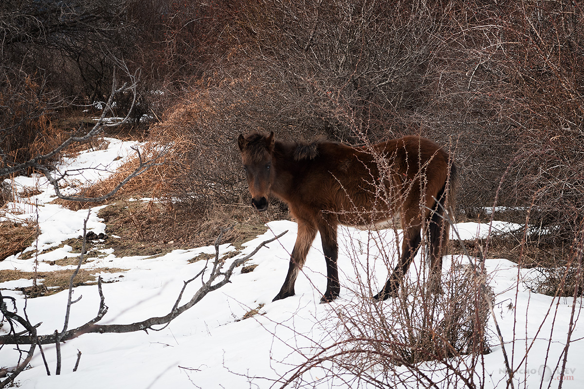 коне в планината