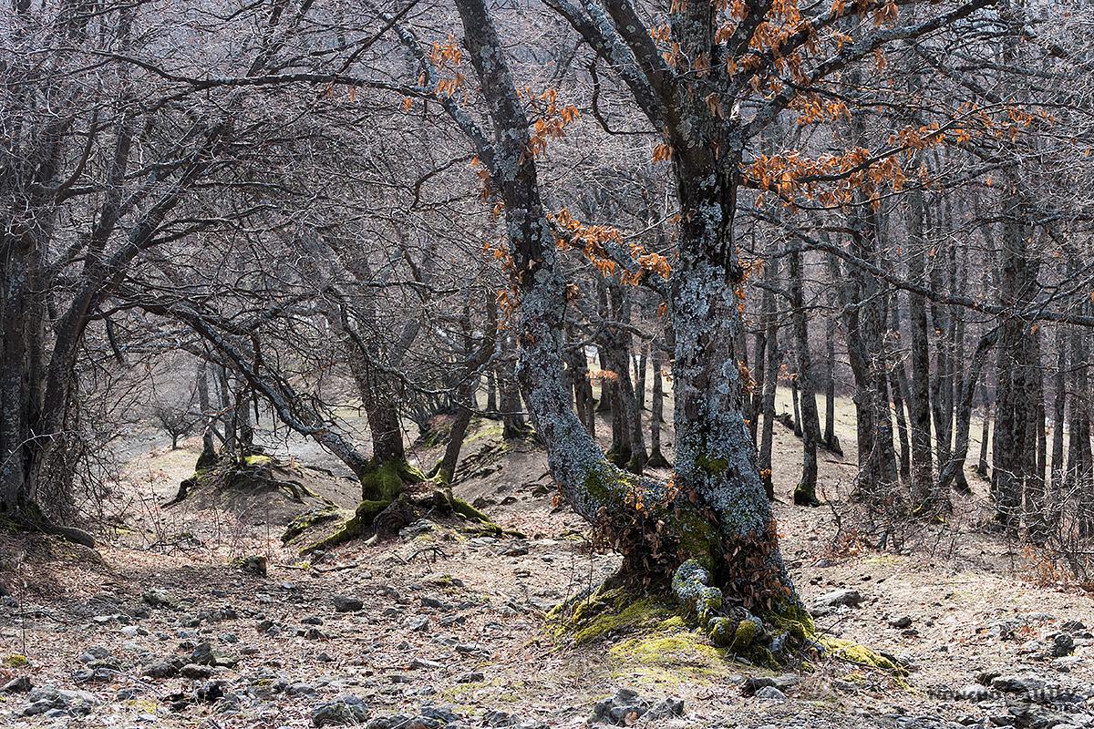 последно спускане през гората