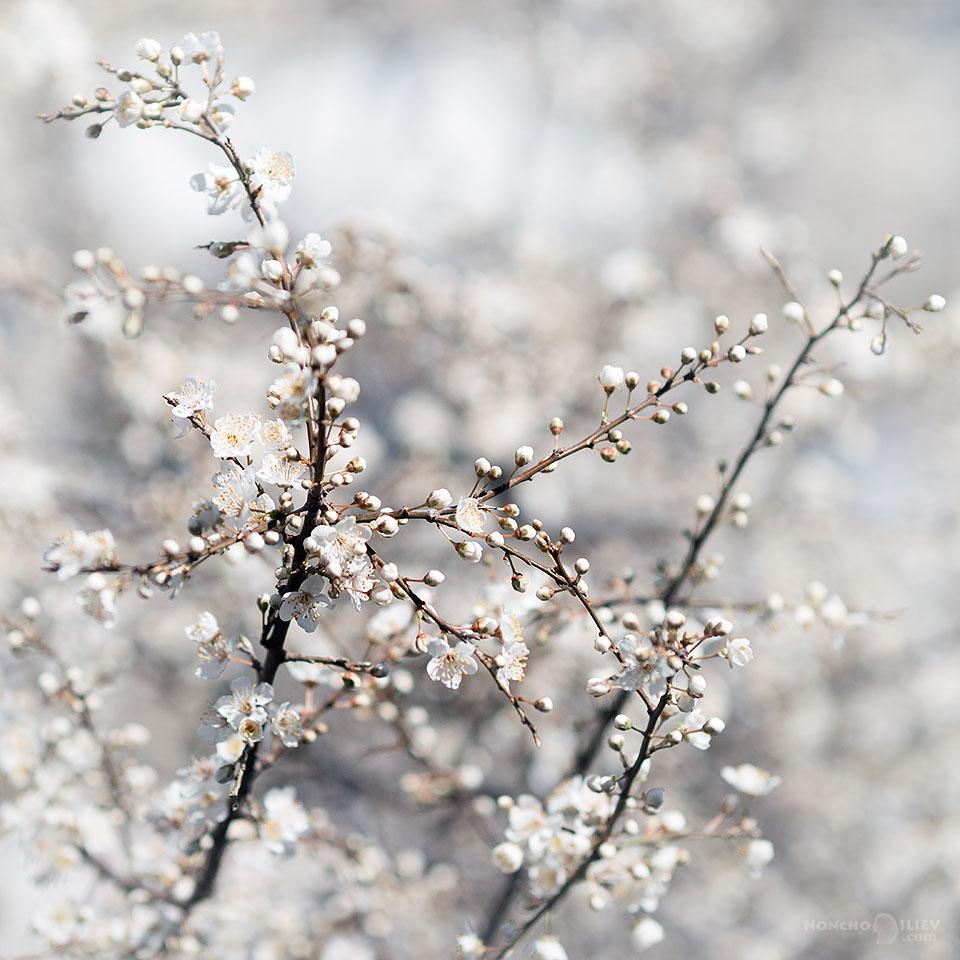 март пролет цъфтеж