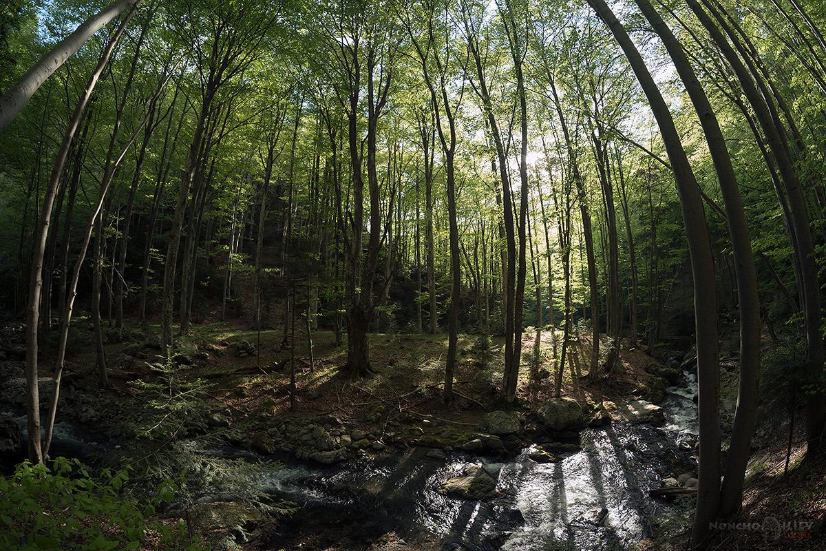 пролет стара река