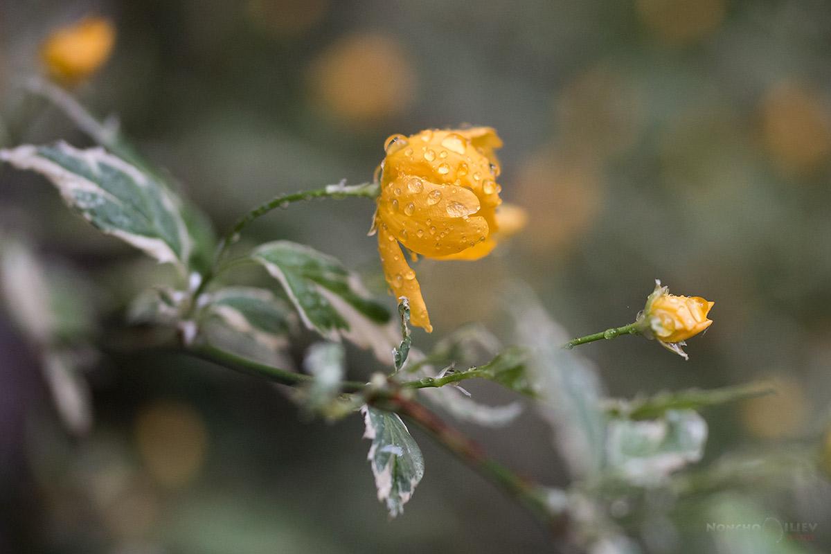 пролет дъжд цвят