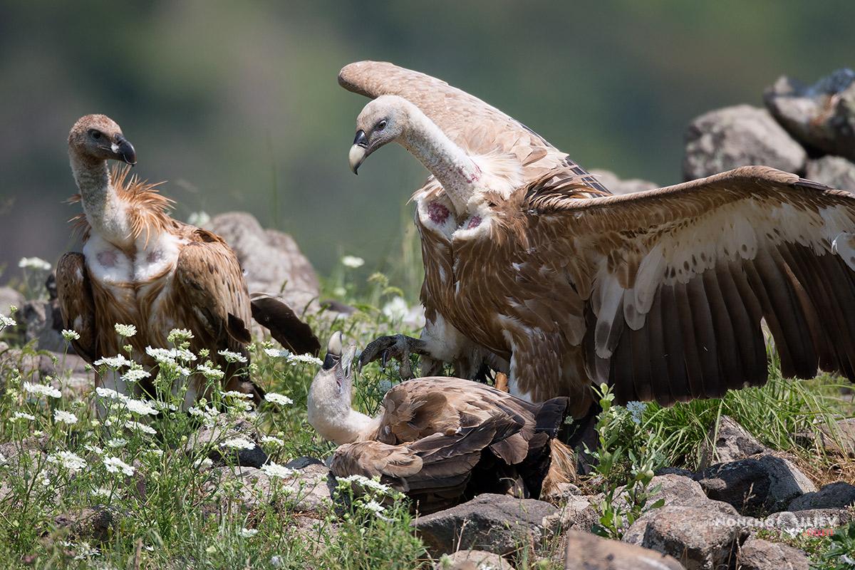 лешояди родопи маджарово