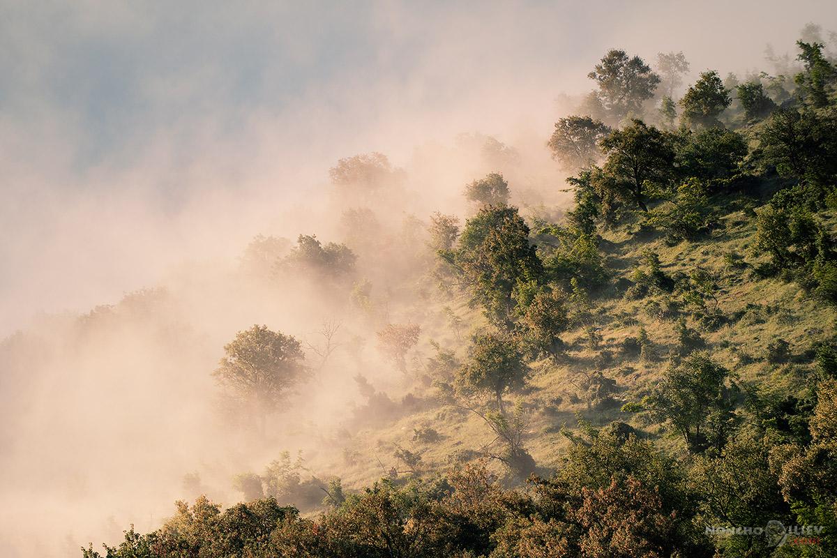 изгрев дървета мъгла родопи