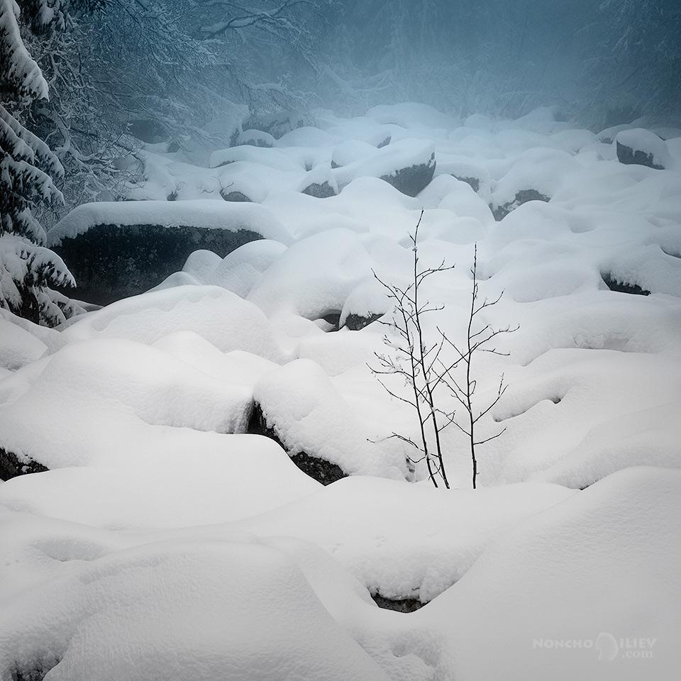Дебел сняг на Златните Мостове
