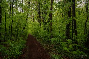 Тъмно и зелено в парка
