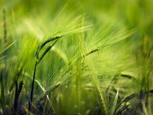 пролетно поле