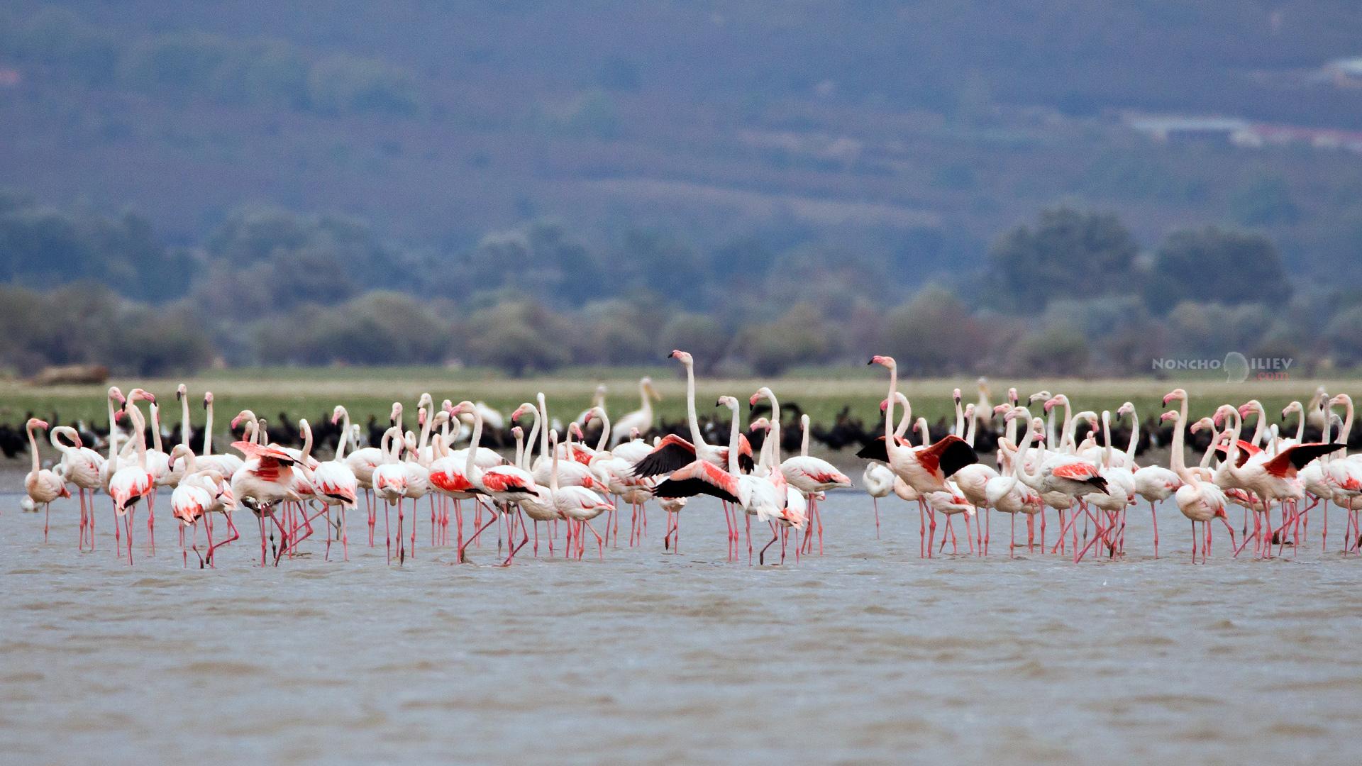 Керкини розово фламинго