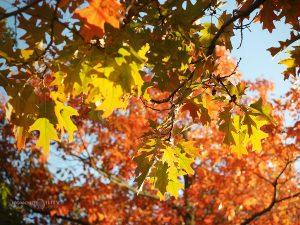 есен слънце