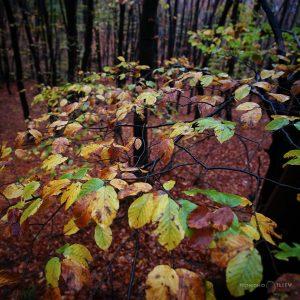 есен дъжд гора