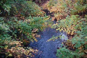 есен над река