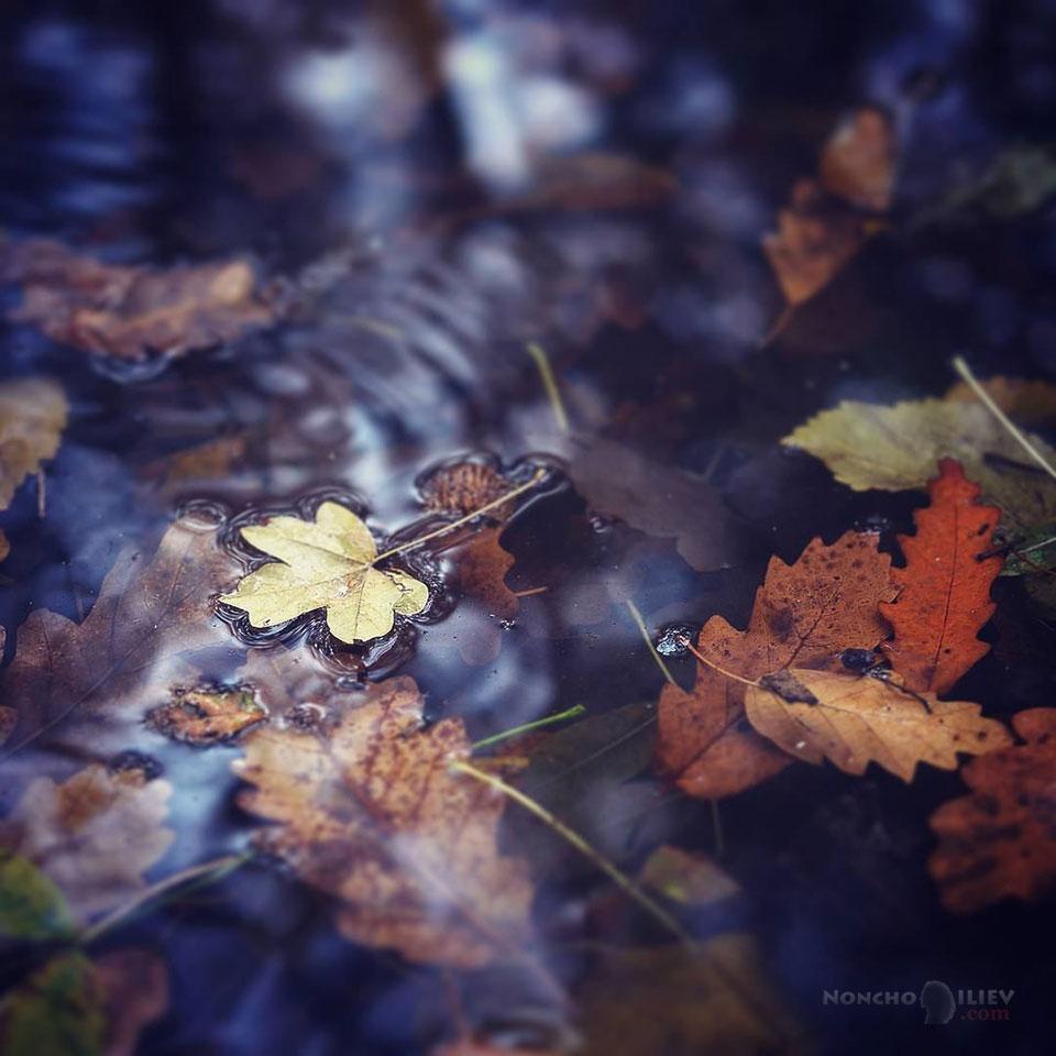 листо отражение есен