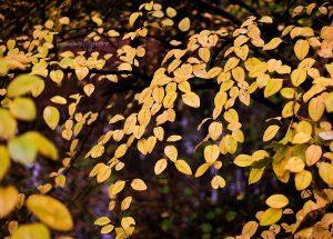 есен жълто