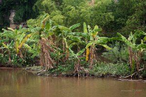 джунгла
