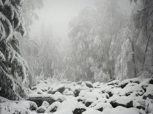 зима златни мостове сняг
