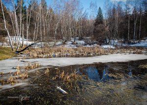 зима първи януари 2018 дендрариум