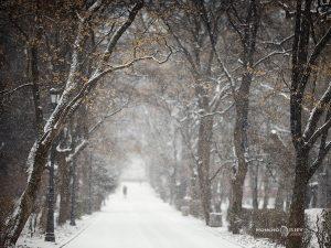 сняг парк софия