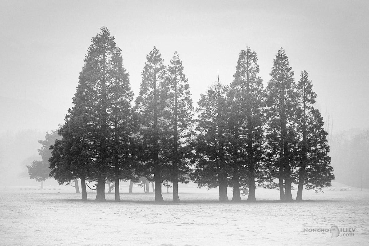 парк мъгла дървета зима