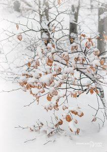 зима Витоша