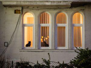 прозорци с котки