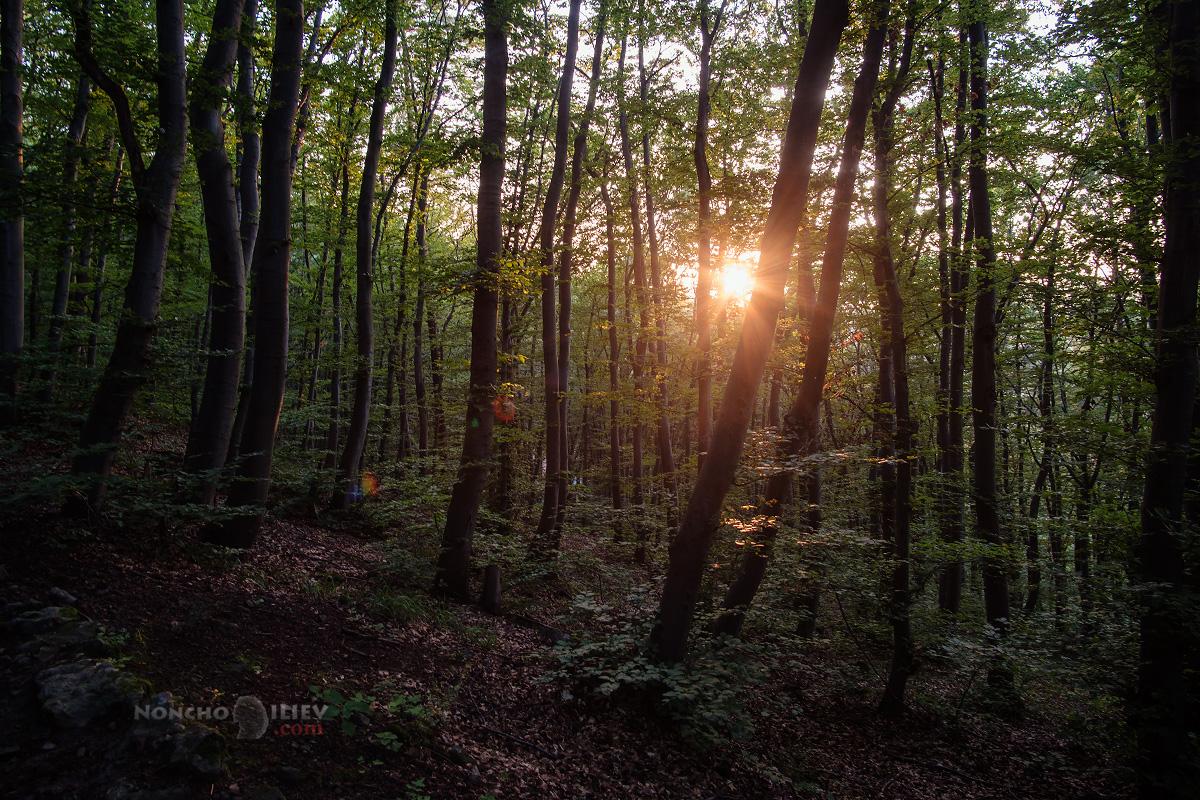 залез в гората витоша