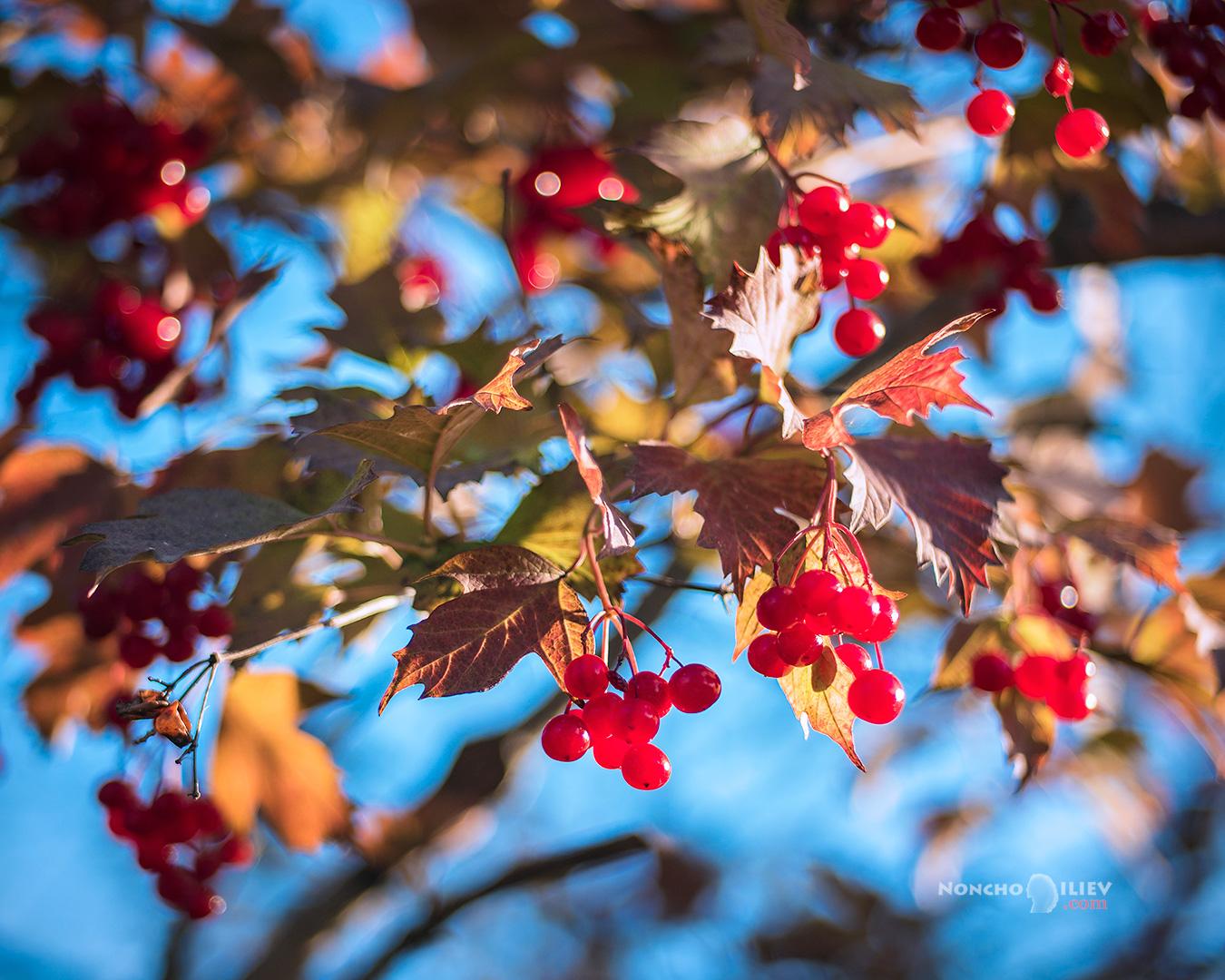 червено синя есен